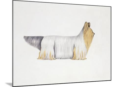 Clydesdale Terrier--Mounted Giclee Print