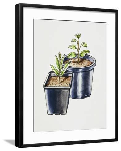 Plastic Pots--Framed Art Print