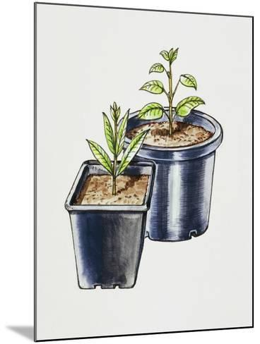Plastic Pots--Mounted Giclee Print
