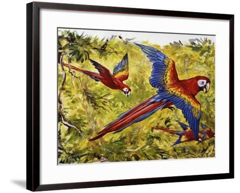 Scarlet Macaw (Ara Macao), Psittacidae--Framed Art Print