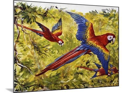 Scarlet Macaw (Ara Macao), Psittacidae--Mounted Giclee Print
