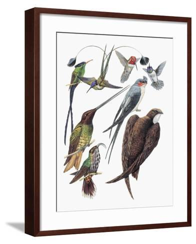 Close-Up of Hummingbirds and Swifts--Framed Art Print