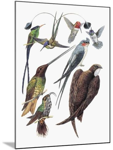 Close-Up of Hummingbirds and Swifts--Mounted Giclee Print