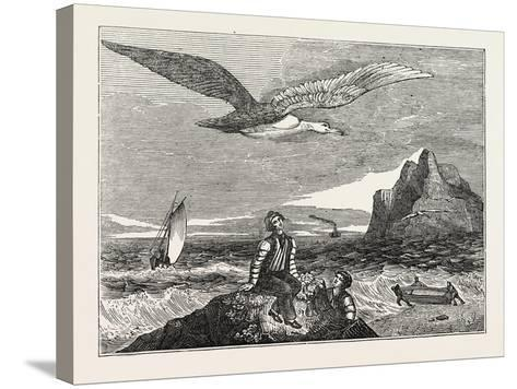 The Wandering Albatross--Stretched Canvas Print