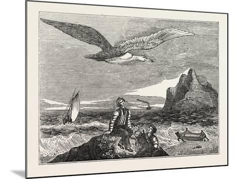 The Wandering Albatross--Mounted Giclee Print