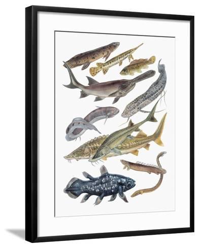 Close-Up of Acipenseriformes Family--Framed Art Print