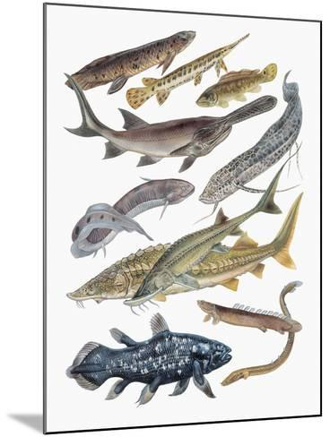Close-Up of Acipenseriformes Family--Mounted Giclee Print
