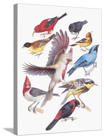 Close-Up of a Group of Birds--Stretched Canvas Print