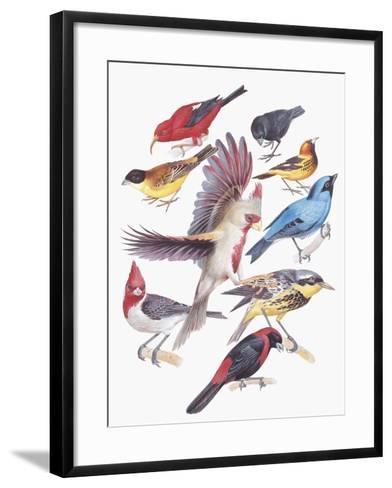 Close-Up of a Group of Birds--Framed Art Print