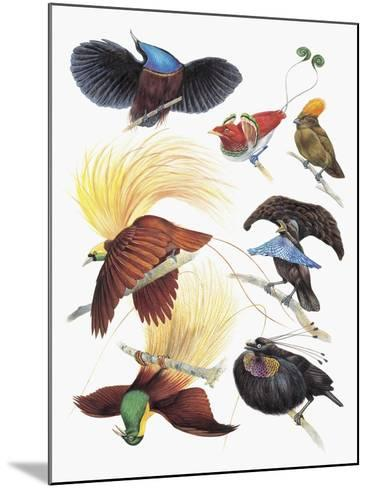 Close-Up of a Group of Birds--Mounted Giclee Print