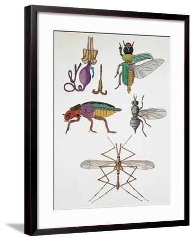 Close-Up of a Group of Hymenoptera Insects--Framed Art Print