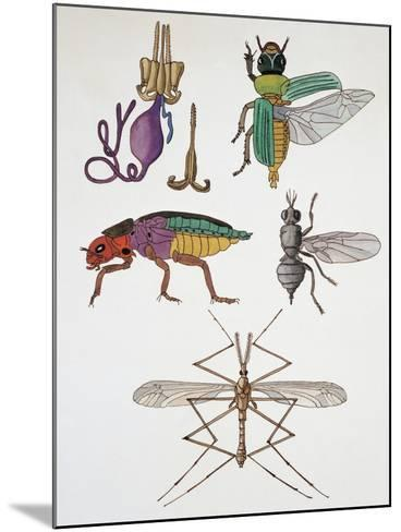 Close-Up of a Group of Hymenoptera Insects--Mounted Giclee Print