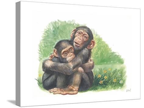 Young Chimpanzees Pan Troglodytes Playing--Stretched Canvas Print