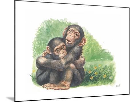 Young Chimpanzees Pan Troglodytes Playing--Mounted Giclee Print
