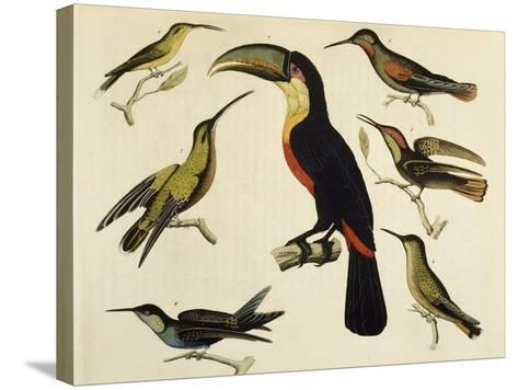 Birds of Brazil, from South America, 1827--Stretched Canvas Print
