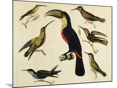 Birds of Brazil, from South America, 1827--Mounted Giclee Print