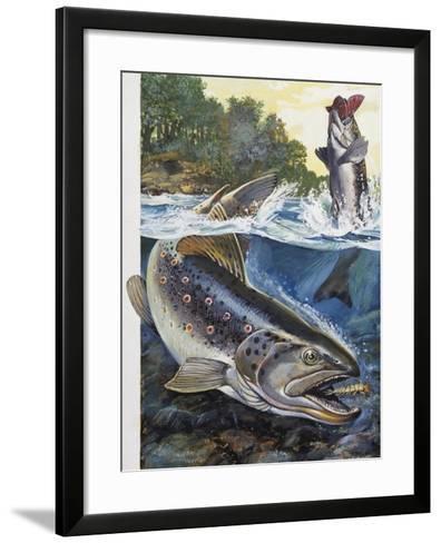 Brown Trout (Salmo Trutta), Salmonidae--Framed Art Print