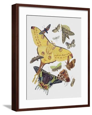 Close-Up of a Group of Lepidoptera Insects--Framed Art Print
