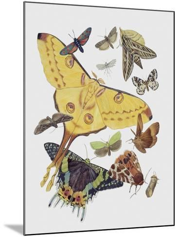 Close-Up of a Group of Lepidoptera Insects--Mounted Giclee Print