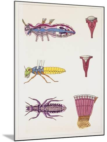 Close-Up of the Anatomic Scheme of Insects--Mounted Giclee Print