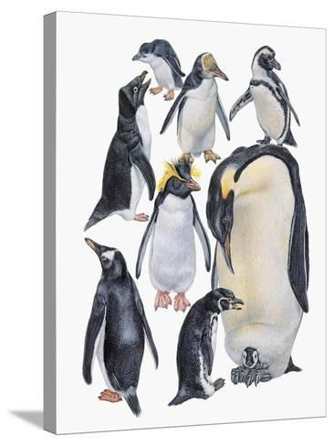 Close-Up of a Group of Penguins--Stretched Canvas Print
