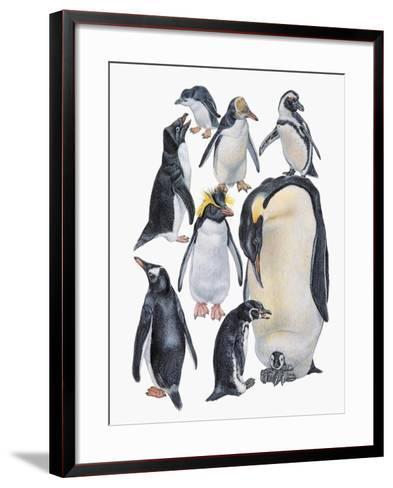 Close-Up of a Group of Penguins--Framed Art Print