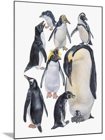 Close-Up of a Group of Penguins--Mounted Giclee Print
