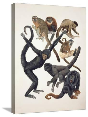 Close-Up of a Group of Primates--Stretched Canvas Print