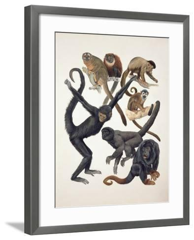 Close-Up of a Group of Primates--Framed Art Print