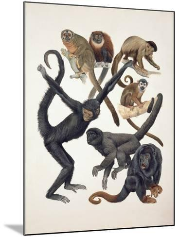 Close-Up of a Group of Primates--Mounted Giclee Print