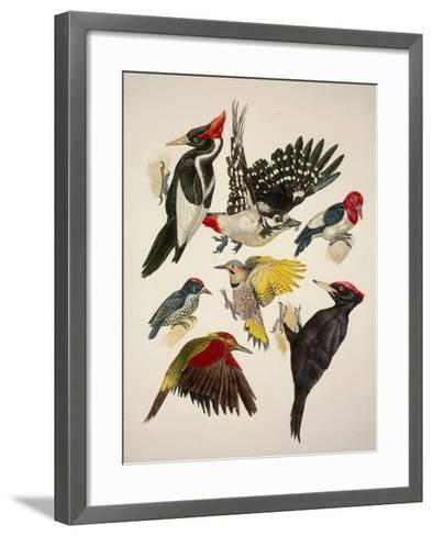 Birds, Variety of Piciformes--Framed Art Print