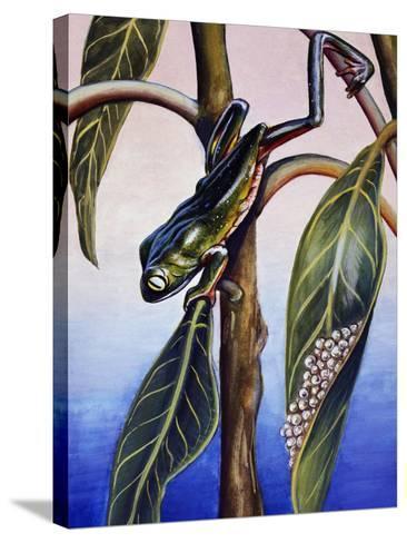 Phyllomedusa Iheringii, Hylidae, Drawing--Stretched Canvas Print