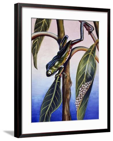Phyllomedusa Iheringii, Hylidae, Drawing--Framed Art Print