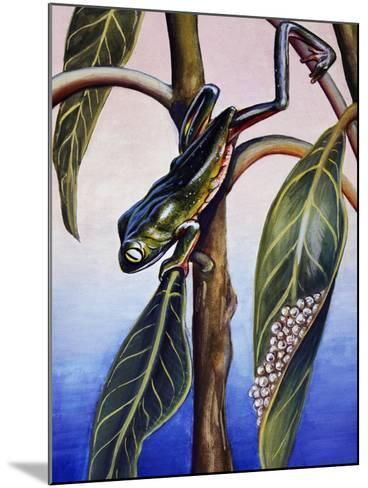 Phyllomedusa Iheringii, Hylidae, Drawing--Mounted Giclee Print
