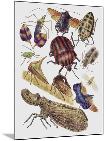 Close-Up of a Group of Hemiptera Insects--Mounted Giclee Print
