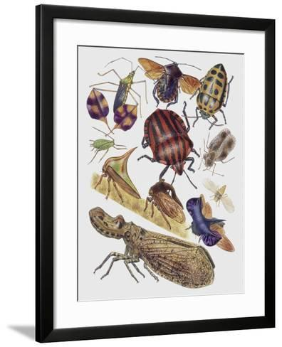 Close-Up of a Group of Hemiptera Insects--Framed Art Print