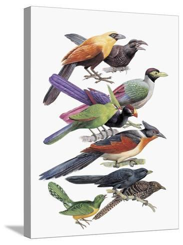Close-Up of Cuckoos Perching on Branches--Stretched Canvas Print