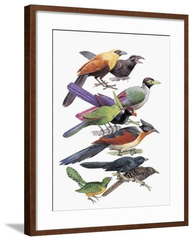 Close-Up of Cuckoos Perching on Branches--Framed Art Print