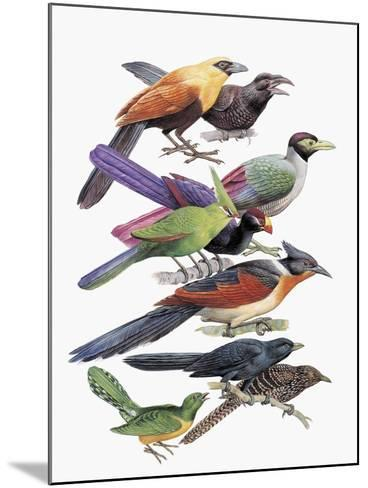 Close-Up of Cuckoos Perching on Branches--Mounted Giclee Print