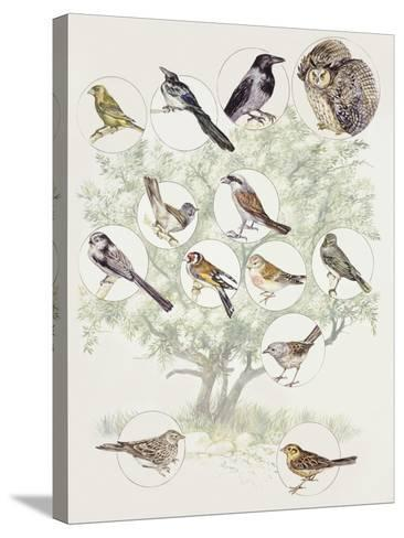 Zoology: Birds, Different Examples--Stretched Canvas Print
