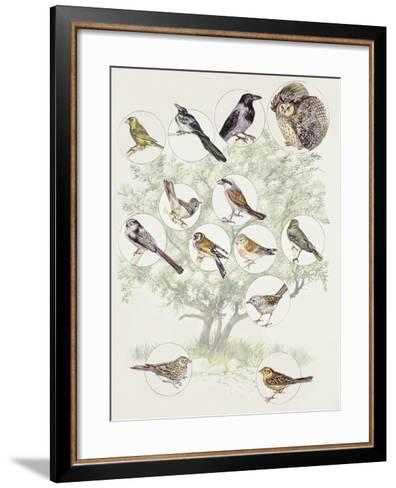 Zoology: Birds, Different Examples--Framed Art Print