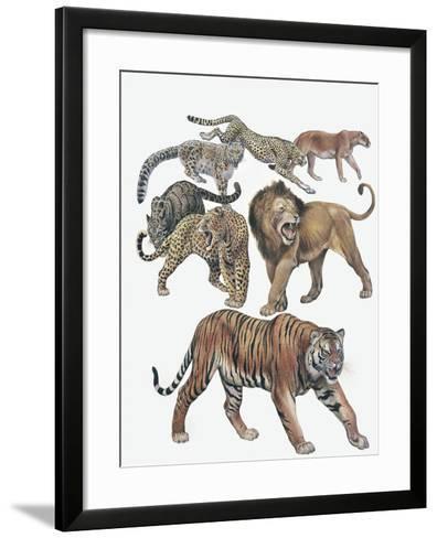 Carnivores from the Felidae Family--Framed Art Print