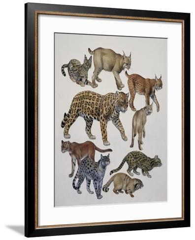 Carnivores Belonging to the Felidae Family--Framed Art Print