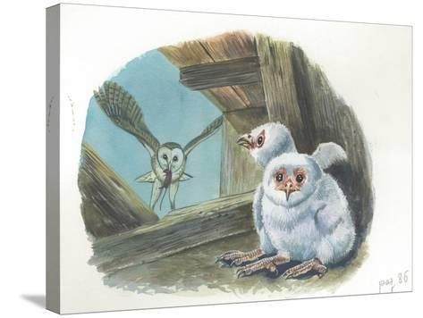 Barn Owl Tyto Alba Bringing Food to Chicks--Stretched Canvas Print