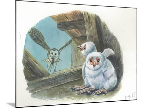 Barn Owl Tyto Alba Bringing Food to Chicks--Mounted Giclee Print