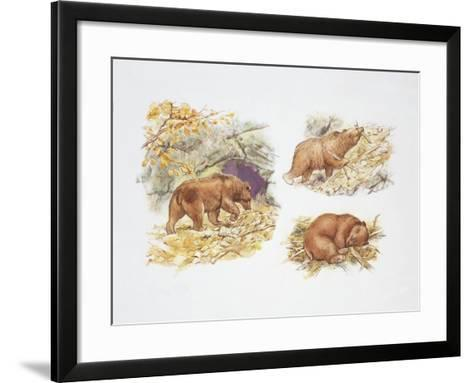 Bears (Ursidae)--Framed Art Print