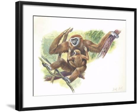 Lar Gibbon Hylobates Lar with a Young--Framed Art Print