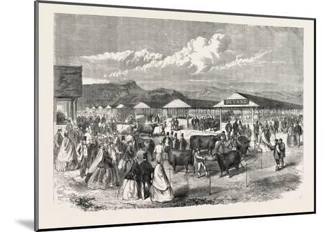 Judging the Cattle at the Plymouth Agricultural Show, UK, 1865--Mounted Giclee Print