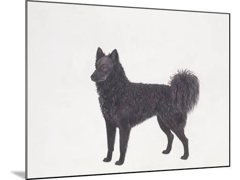Mudi Dog--Mounted Giclee Print
