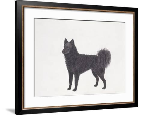 Mudi Dog--Framed Art Print